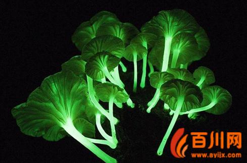…   花木大世界网6月8日消息:还记得《阿凡达》里会发光的植物