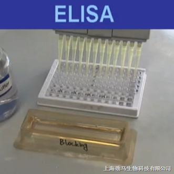 wk20042小鼠高铁血红蛋白(mhb)elisa试剂盒